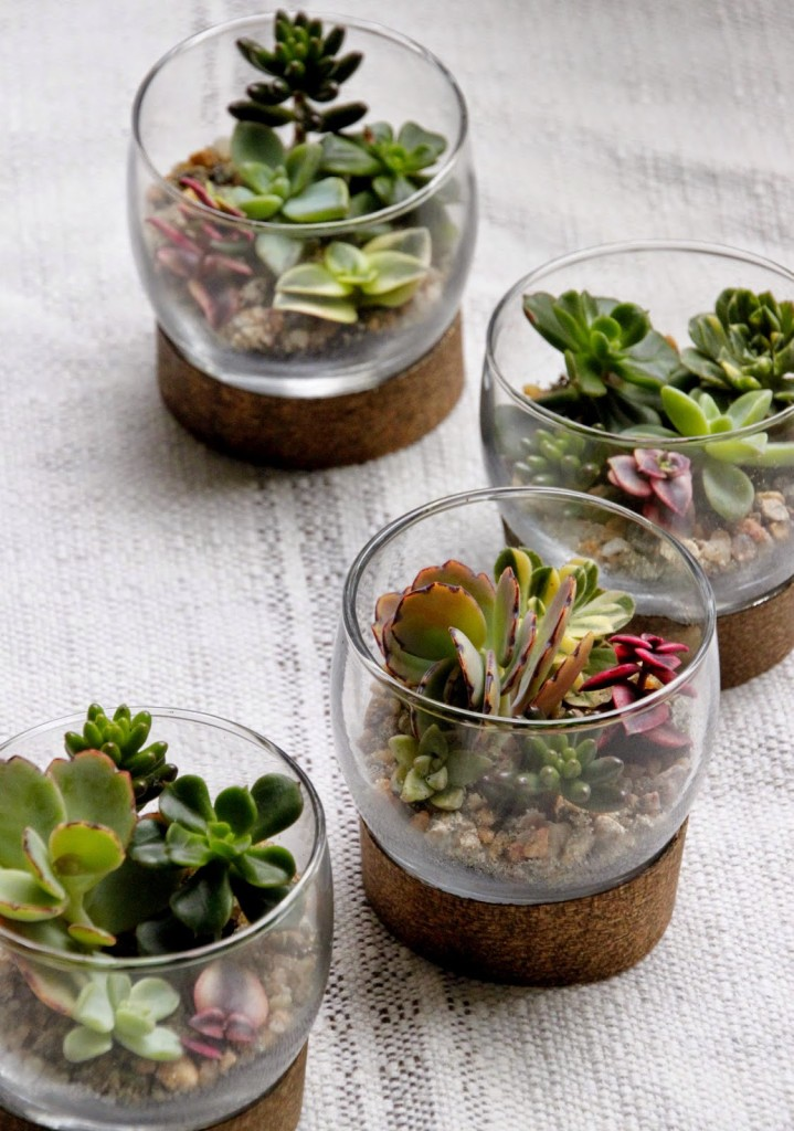 Tiny succulent terrarium place settings tilly 39 s nest for Html table options