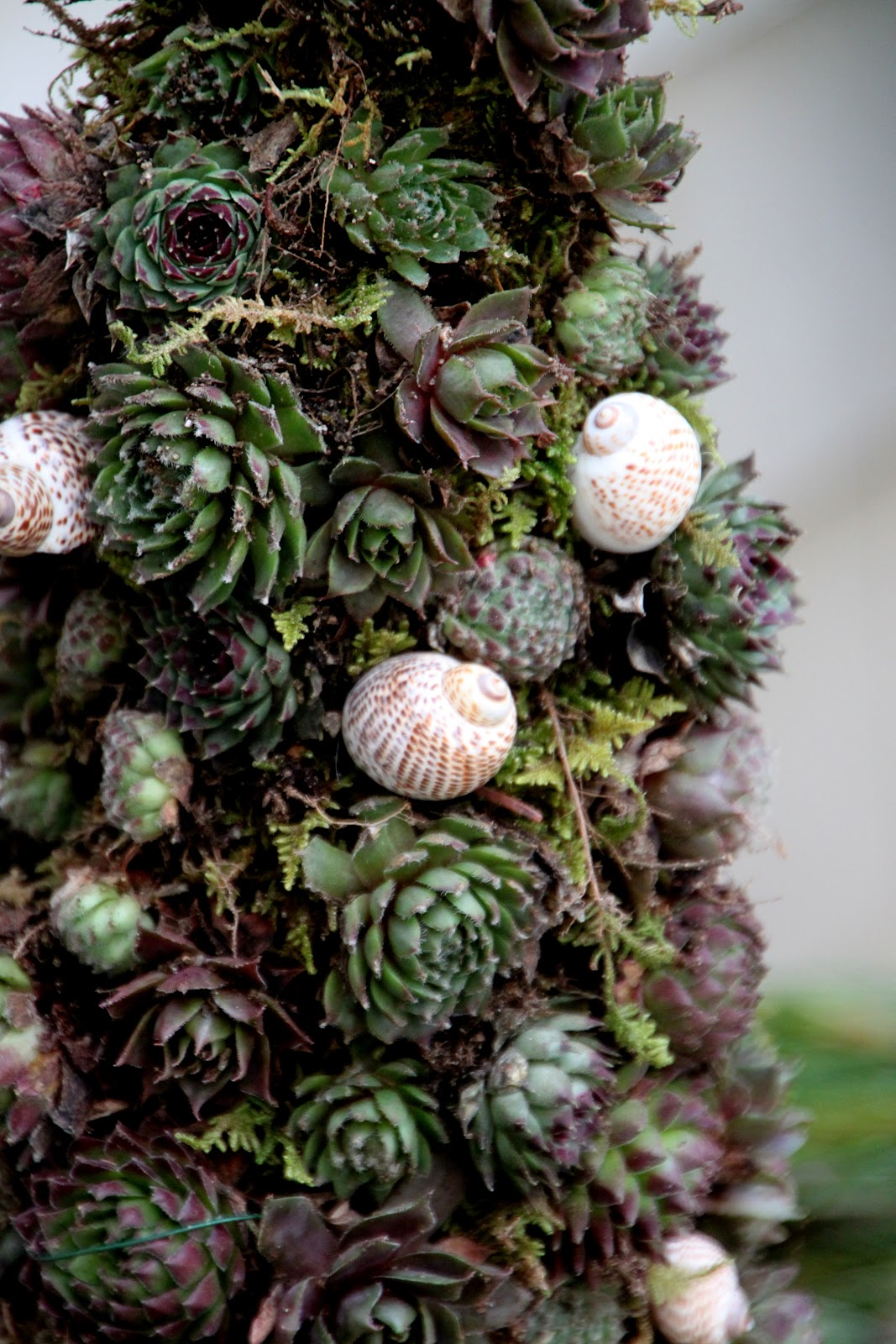 A Living Christmas Tree Tilly 39 S Nest