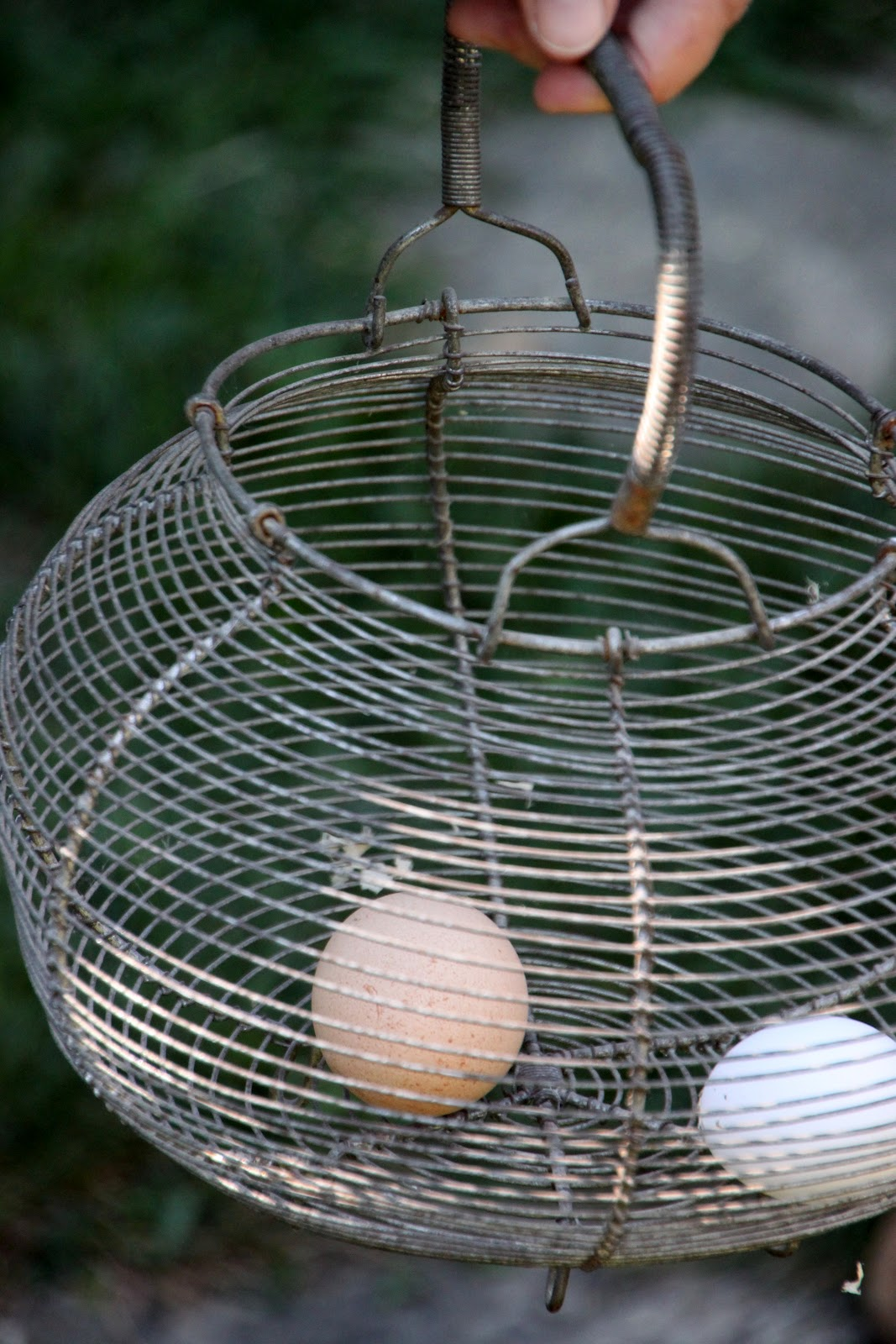 10 reasons for decline in backyard chicken egg production