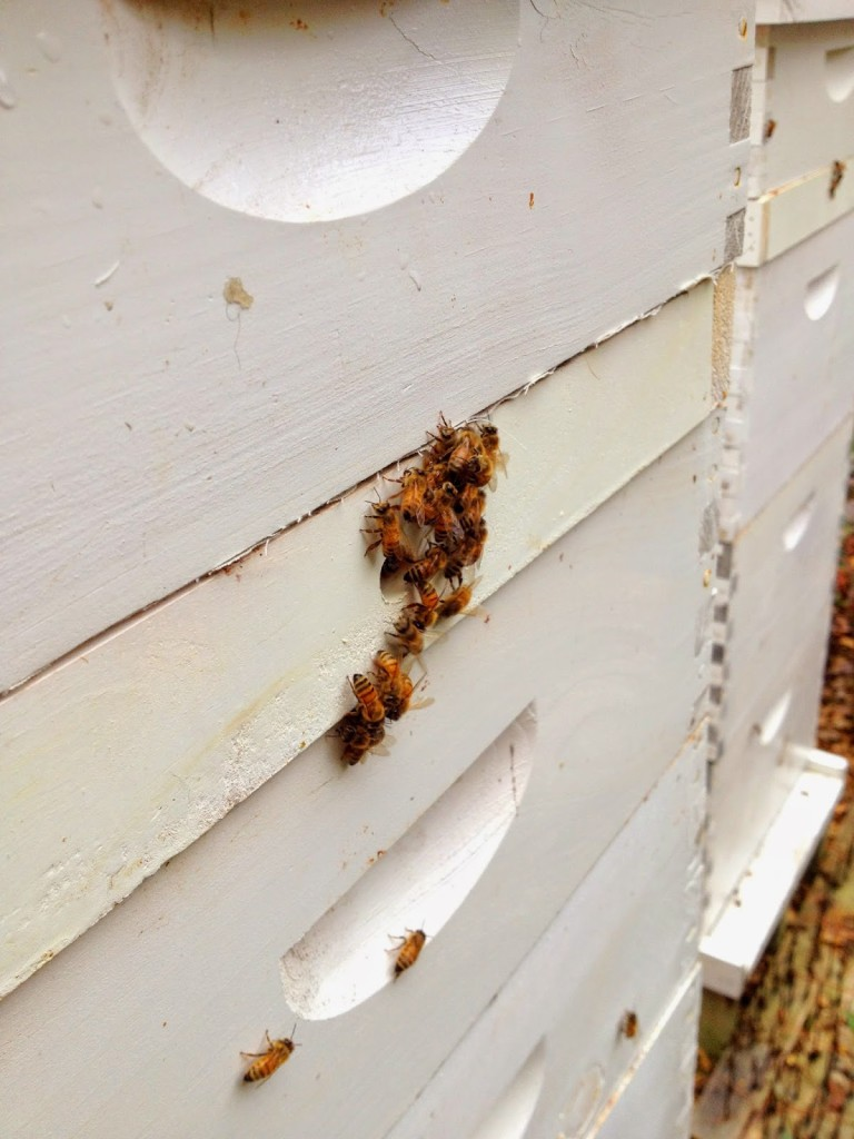 How to make a moisture quilt for a langstroth hive honey - The Feeding Shim Has A Small One Inch Hole Drilled Into The Middle Of It This Serves As An Upper Entrance As Well As A Ventilation Hole In The Winter